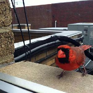 Mr. Cardinal's Futility