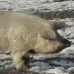 Michigan Makes Felons Of Hog Farmers