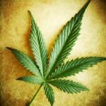 Uruguay Government Plans To Sell Marijuana