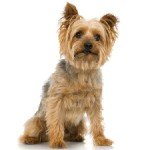 Town Considers Banning Dogs