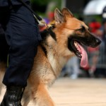 Supreme Court Throws Cop Dogs A Bone While Leashing People