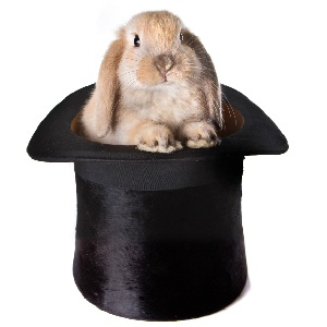 The Magician's Rabbit And Bureaucratic Idiocy