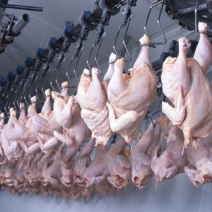 Consumer Groups Want More Oversight Of Poultry Industry