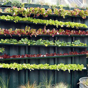 Backyard Gardening In Small Spaces