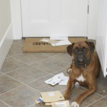 Lawmaker Mocks IRS With 'The Dog Ate My Tax Receipts Act'