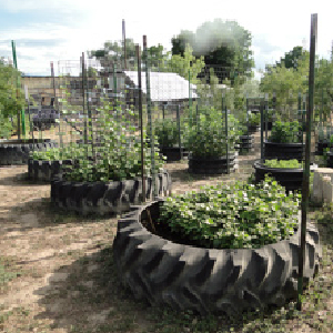 gardening with tires
