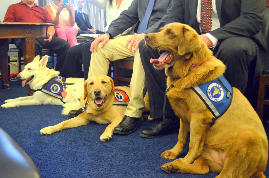 Cila, right, a retired military working dog, yawns as officials from the American Humane Association and members of Congress talk about transferring military dogs to civilian life, in a Capitol Hill event