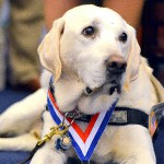 Congress Goes To The Dogs, Pushing Support For Retired Military K9s