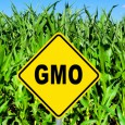 Beware GMOs; They Set You Up For Cancer, Other Diseases