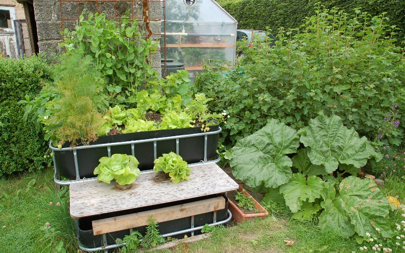 Raise plants and fish together with aquaponics personal for Fish and plants in aquaponics